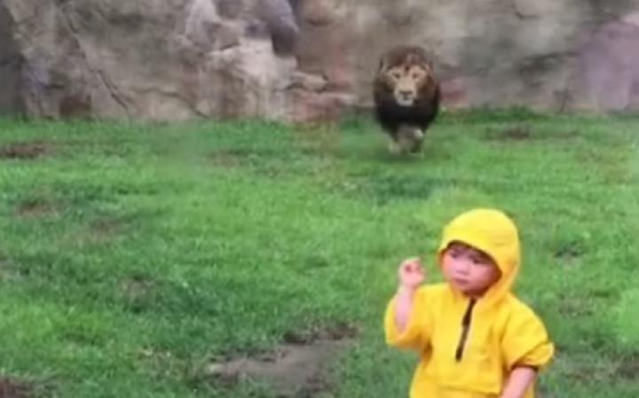Leao atira-se a criança em zoo japonês