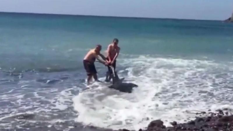 Homens salvam tubarão