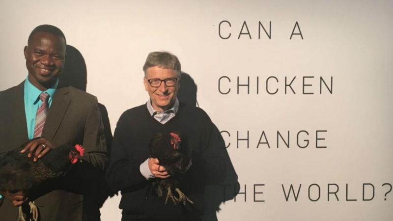 Bill Gates quer salvar o mundo com galinhas