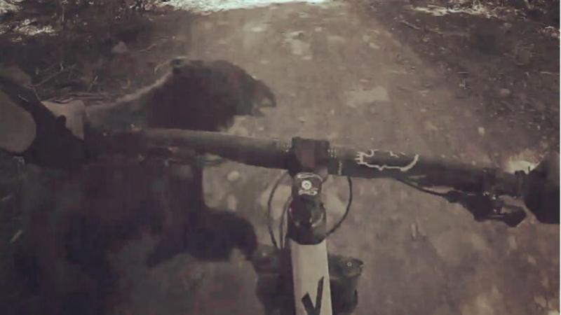 Ciclista embate em urso (reprodução Instagram)