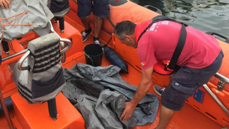 Golfinho resgatado