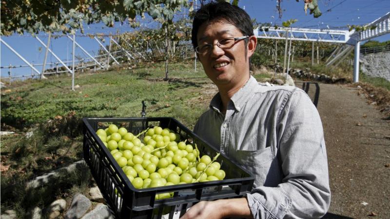 Uvas no Japão