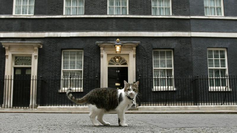 Larry, o gato de Downing Street
