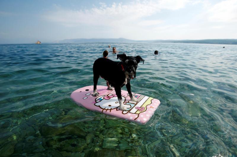 Praia para cães