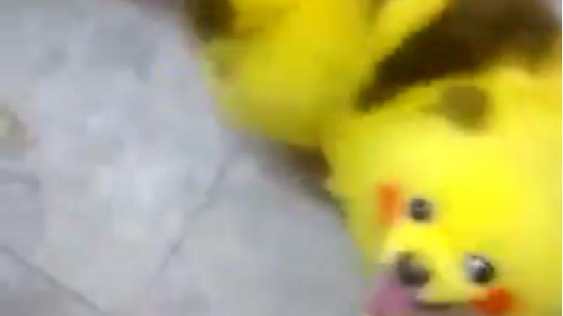Pintou o cão para ficar igual ao Pikachu