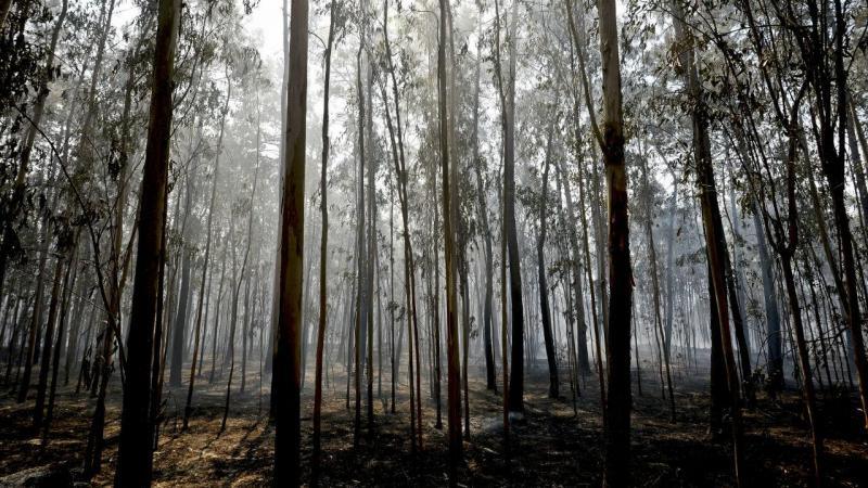Incêndio em Vale de Cambra, Aveiro (arquivo)