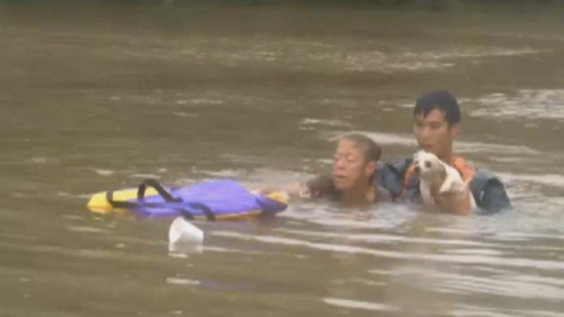 Grupo de socorristas salva mulher e cão de afogamento