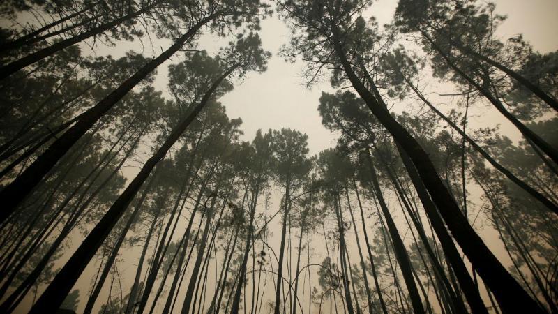 Incêndio em São Pedro do Sul, Viseu