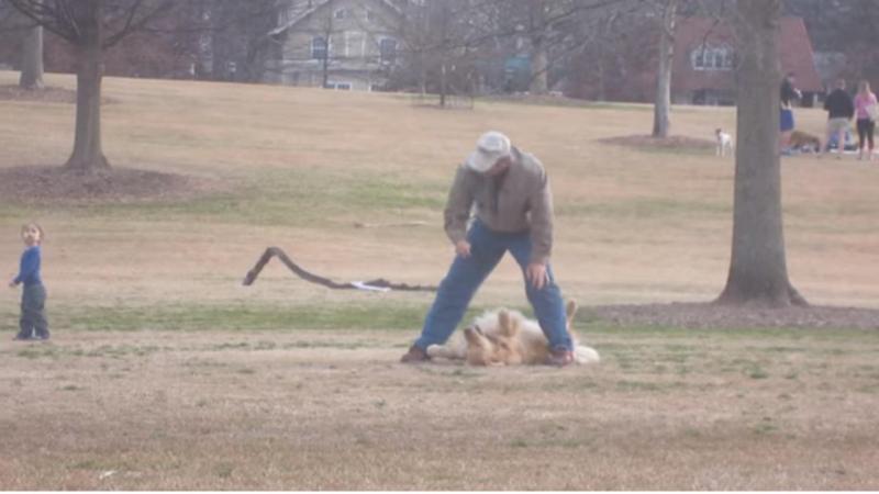 Cão faz-se de morto para não ter que ir embora