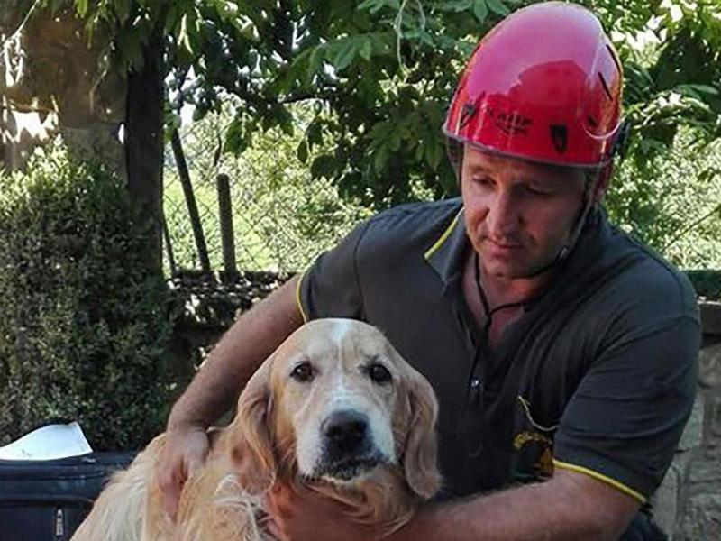Cão resgatado dos escombros em Amatrice