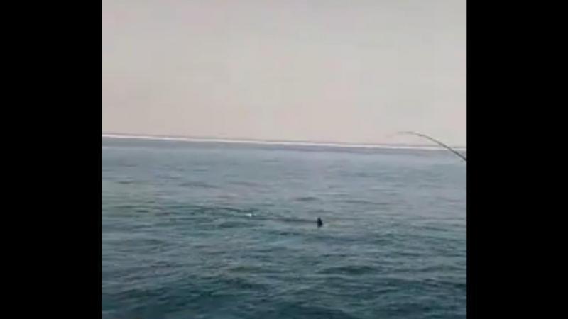 Tubarão avistado ao largo de Setúbal
