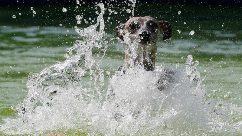 Cães-voadores saltaram para a água para receberem medalhas