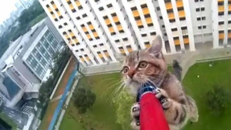 Gato resgatado (reprodução twitter)