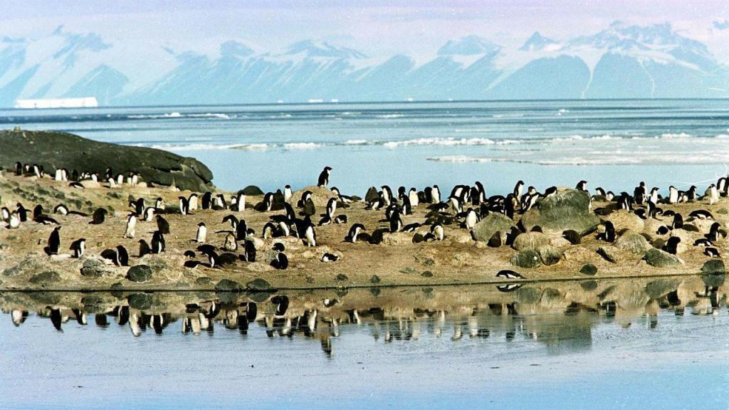 Pinguins no Mar de Ross, Antártida