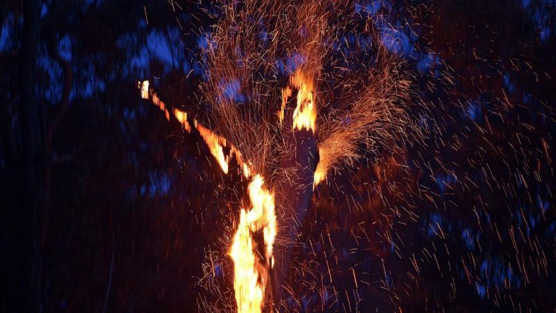 PJ deteve dois suspeitos de atearem fogos em Vinhais e Alijó
