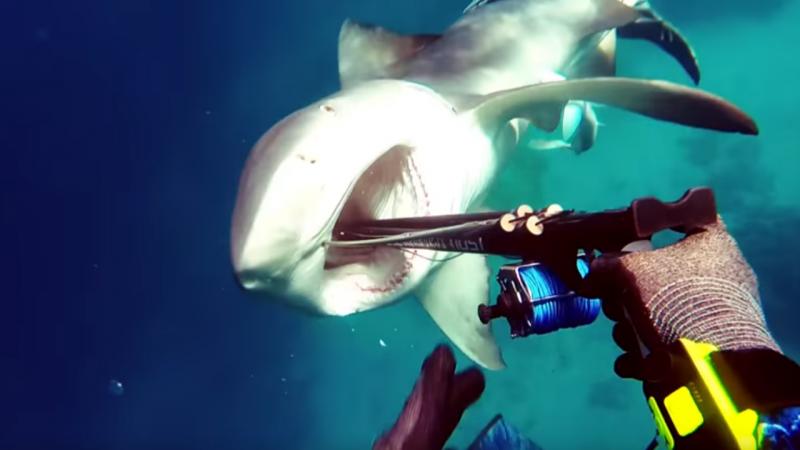 Mergulhador escapa ao ataque de um tubarão na Austrália