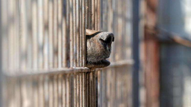 Animais do zoo de Mossul estão a morrer à fome