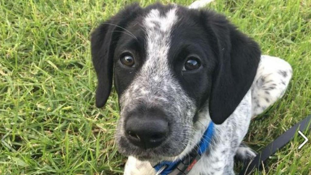 Cão de dez meses foi abatido pela polícia na Nova Zelândia