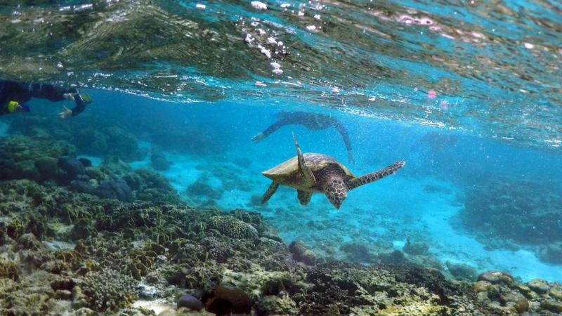 Grande Barreira de Coral, na Austrália