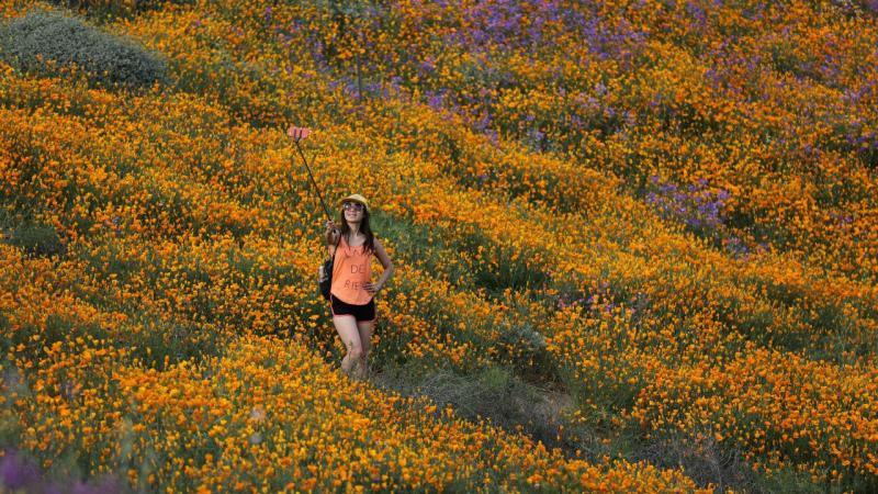 A primavera chegou ao deserto da Califórnia