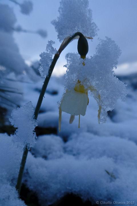 Neve na Aldeia de Bujões