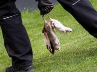 Adeptos do Bröndby atiraram ratos para o relvado
