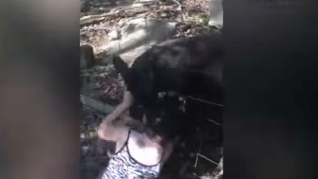 Criança atacada por canguru