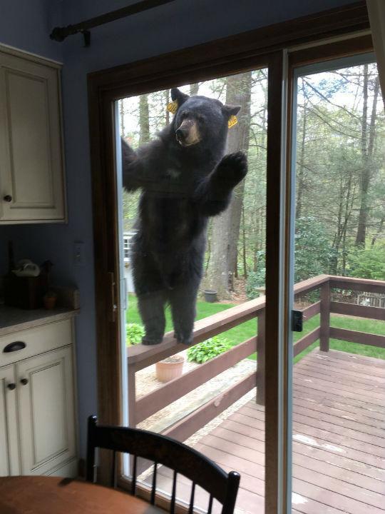 E se um urso quiser os seus Brownies?