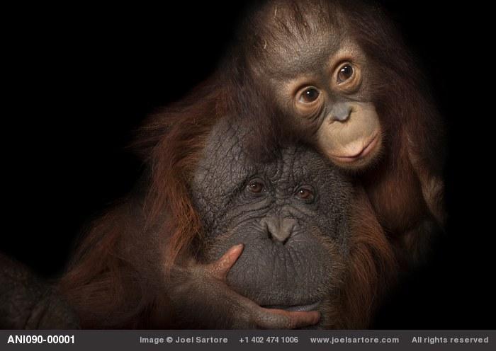 Este fotógrafo quer retratar todas as espécies de animais do mundo