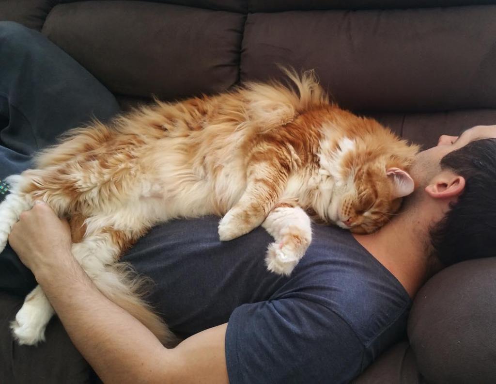 Este é o maior gato do mundo