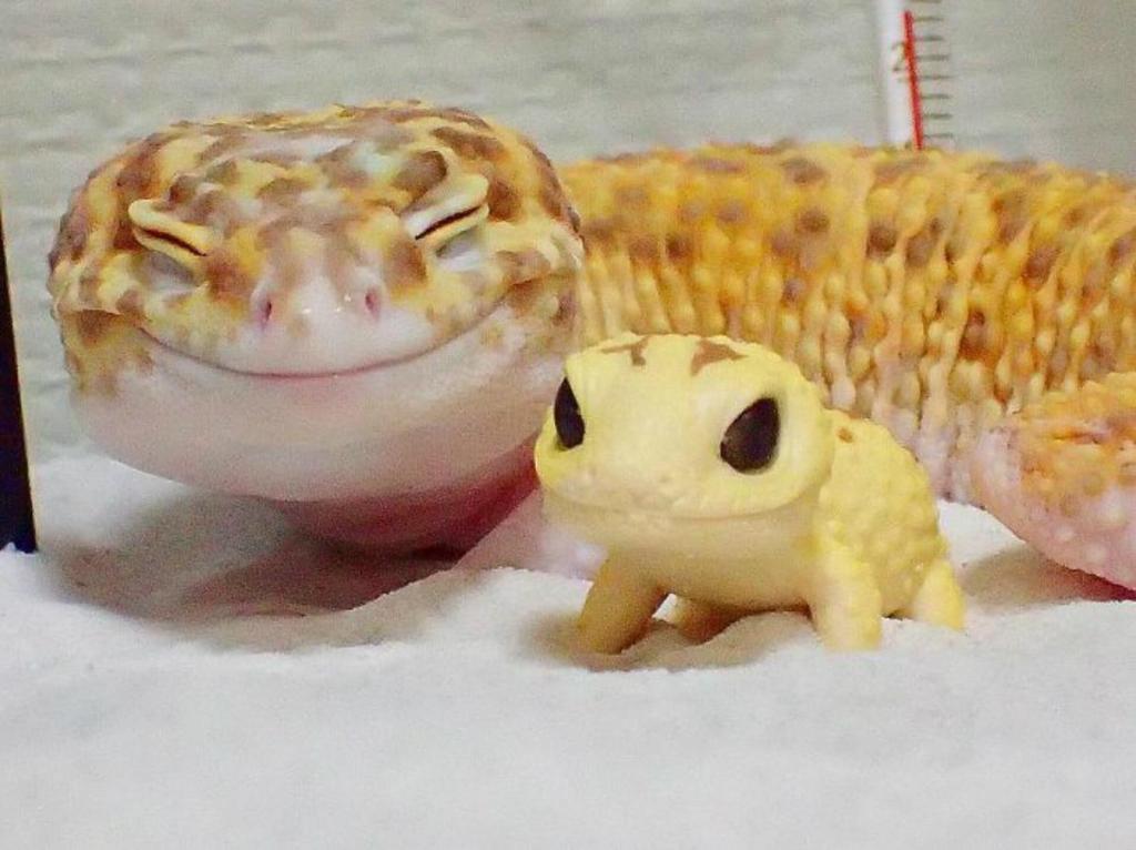 Esta lagartixa parece ter encontrar um novo melhor amigo