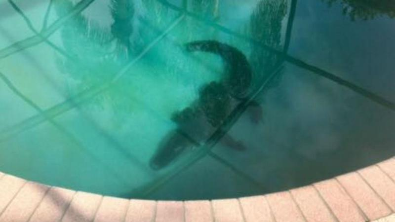 Jacaré encontrado dentro piscina na Flórida