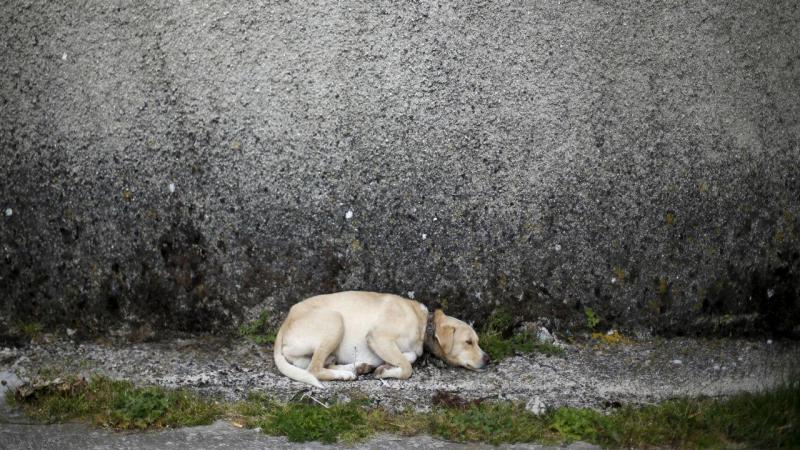 Animal abandonado