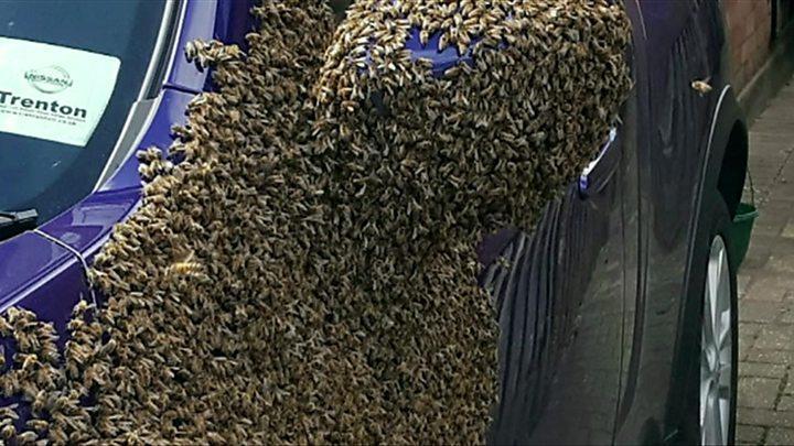 Mais de 20.000 abelhas invadem carro
