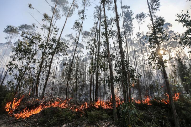 Incêndio em Figueiró dos Vinhos