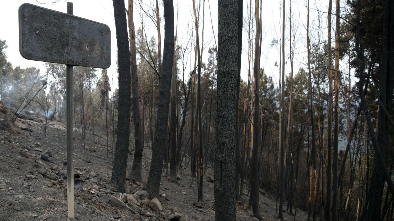 """Resultado de imagem para Proteção Civil: """"Todos os incêndios estão dominados"""""""