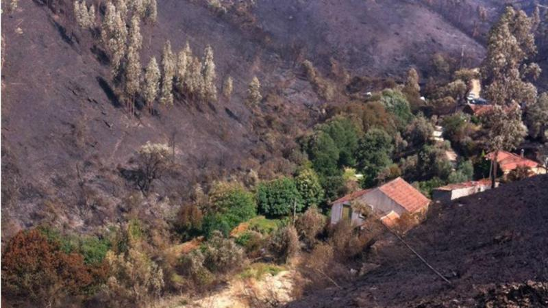 Quinta rodeada de carvalhos e castanheiros escapou ao fogo