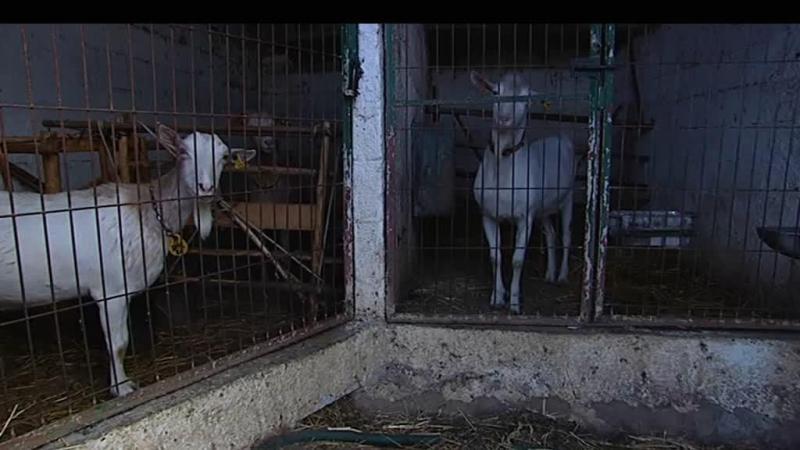 Pedrógão: agricultores alimentam animais com rações oferecidas
