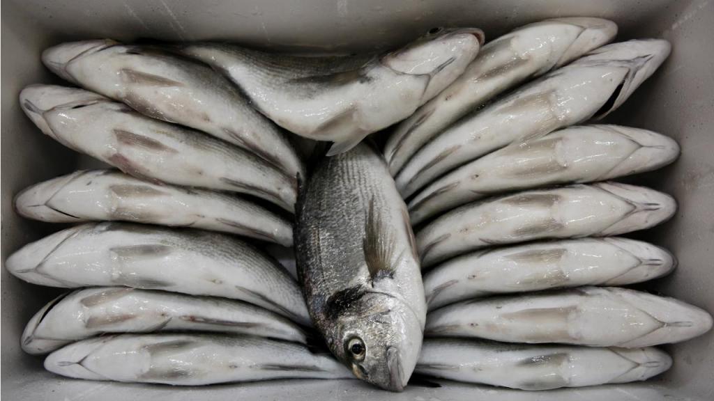 Peixe - Aquicultura