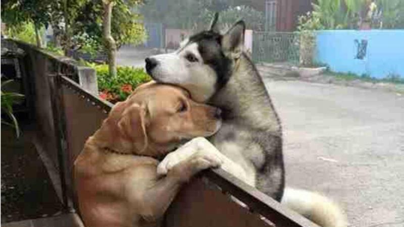 Amizade canina