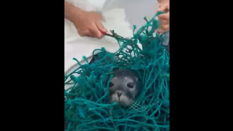 Pescadores salvam foca presa em rede de pesca