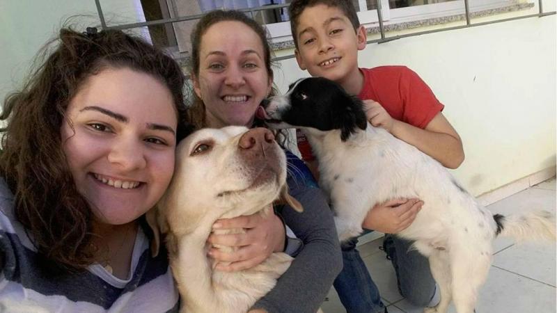 Cão encontrado no motor do carro procura família
