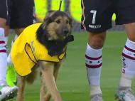 Jogadores do Colo Colo entram com cães no relvado