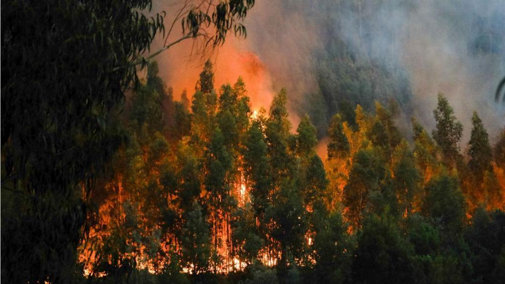Incêndio em Coimbra