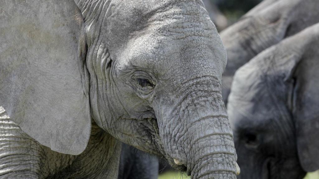 Elefante na Namíbia