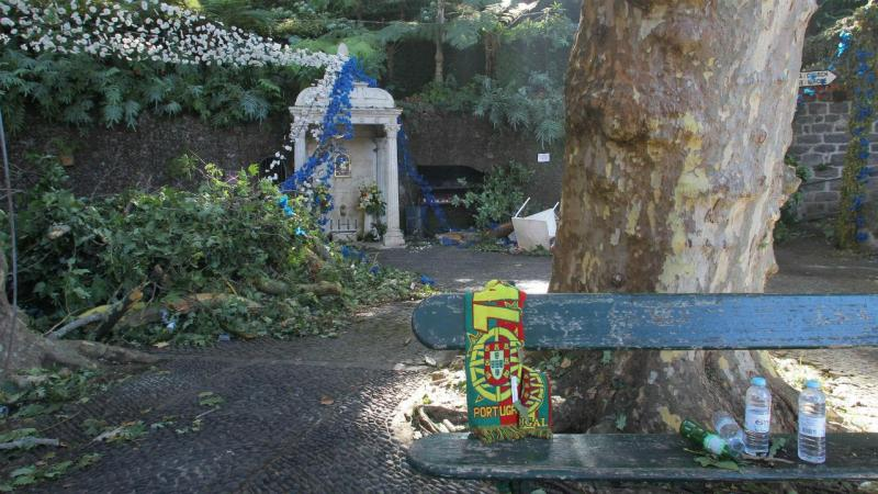 Queda de árvore no Funchal