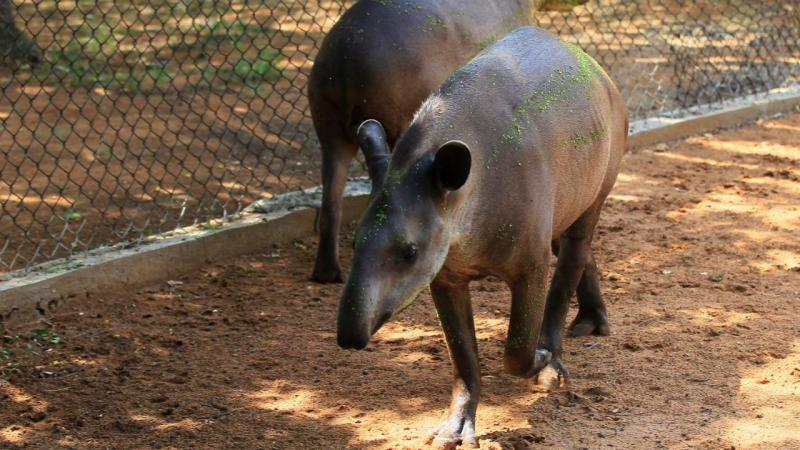 Crise na Venezuela. Animais roubados de zoo para servirem de alimento