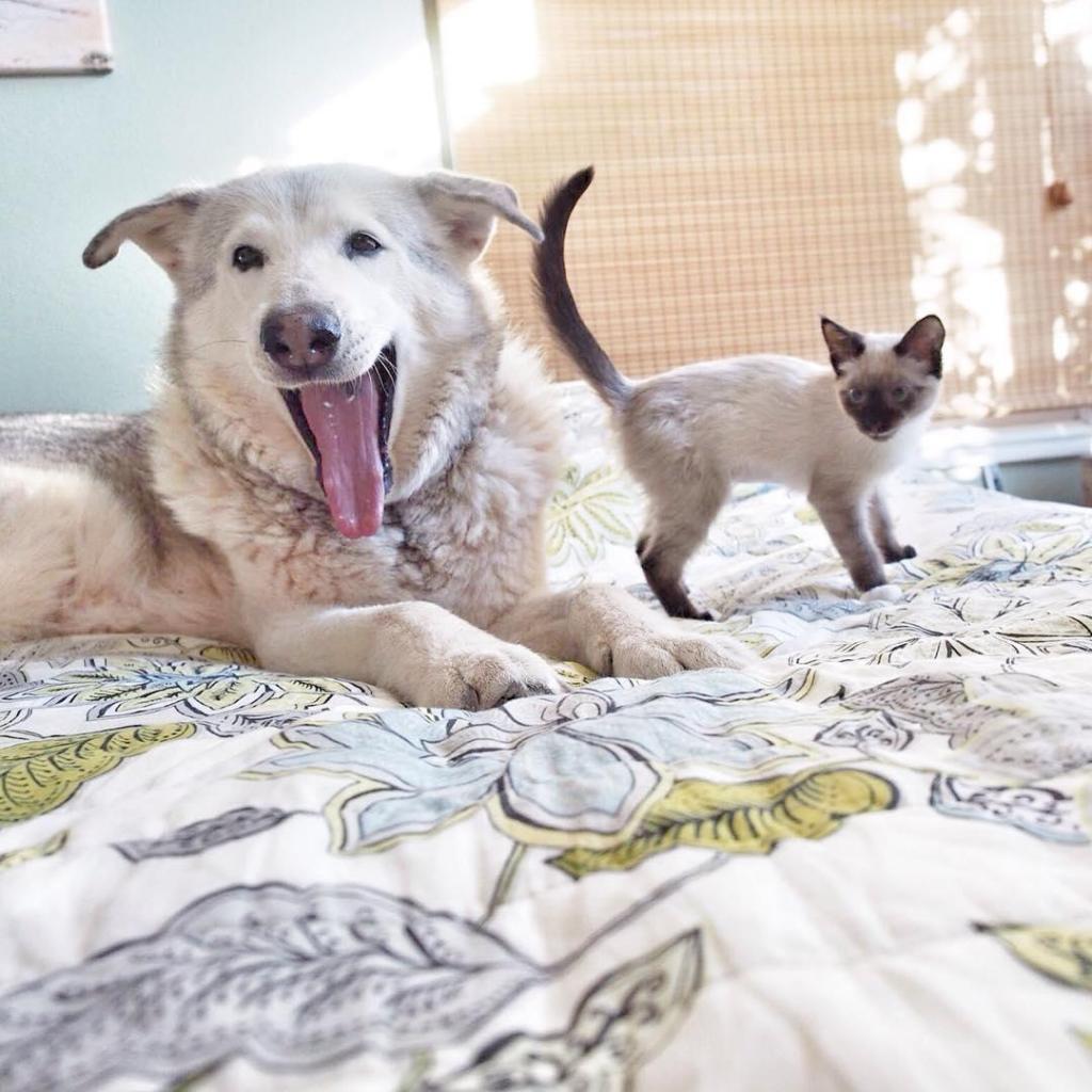 A cadela Flora entrou em depressão depois de perder o amigo Dexter, um gato que morreu ao fim de 20 anos. Para resolver o problema, a dona adotou uma ninhada de gatos bebés para lhe fazerem companhia.