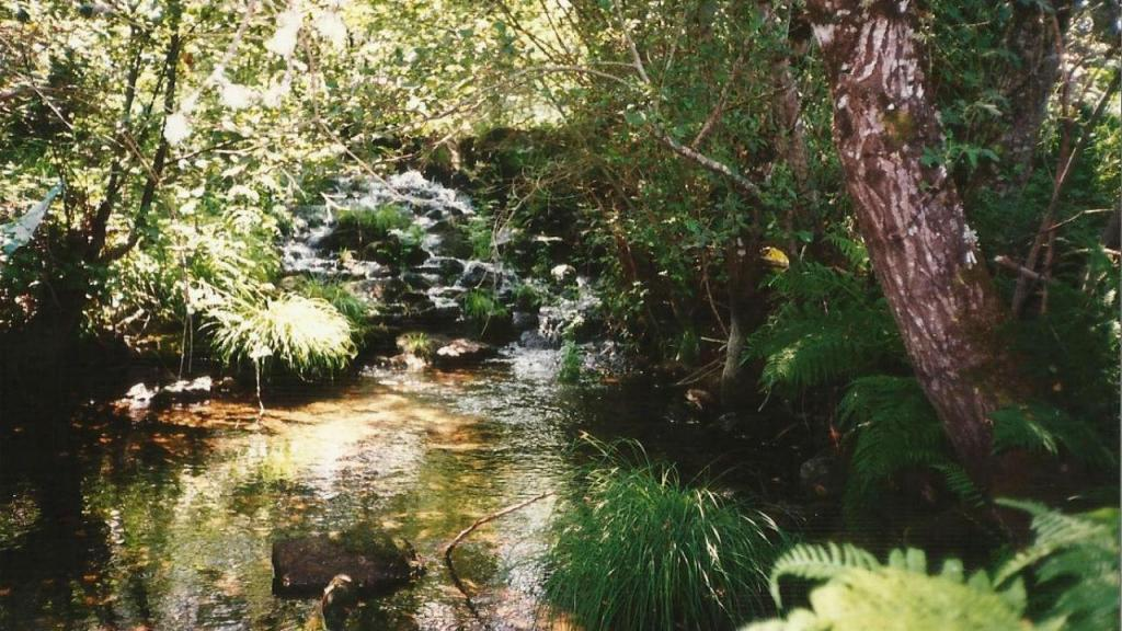 Nascente do Rio Tâmega