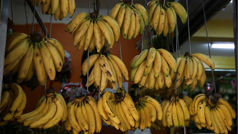 Bananas - arquivo